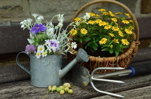 flowers-779317_640