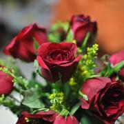 rose-577211_640